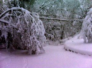 Snow - February, 2010