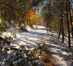 Driveway with Snow Foliage