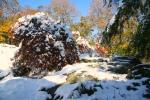 Snow Foliage